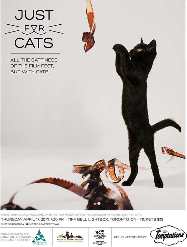 CatsFestival600