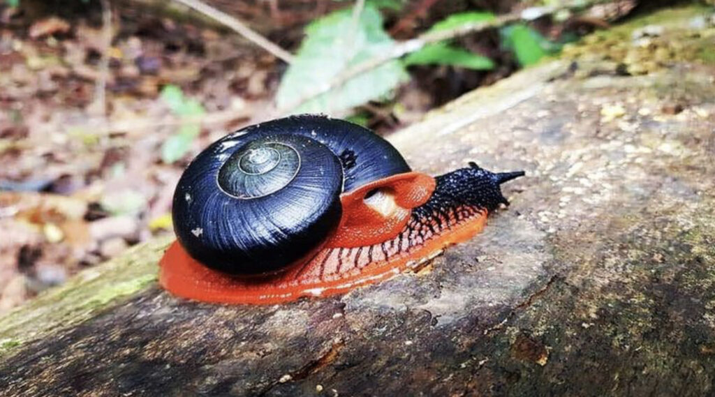The fire snail